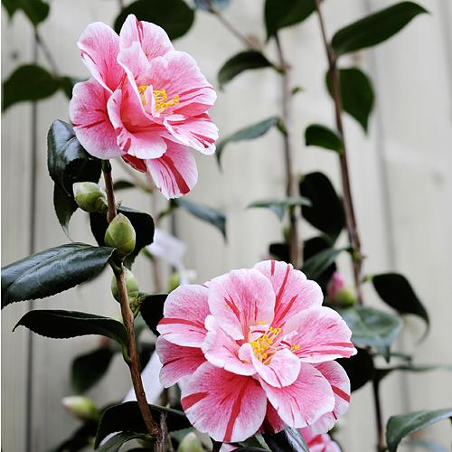 Pflanzen Laukart Hilden, Ihr Pflanzencenter Für Zimmerpflanzen